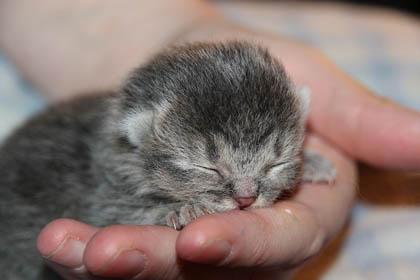 Raising orphaned kittens